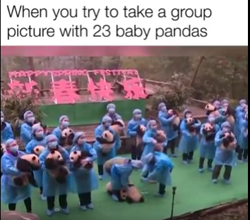 Group photo with 23 little pandas
