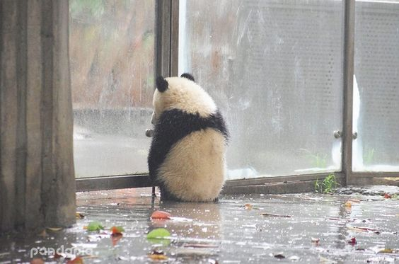 It's raining so I can't go out to play.