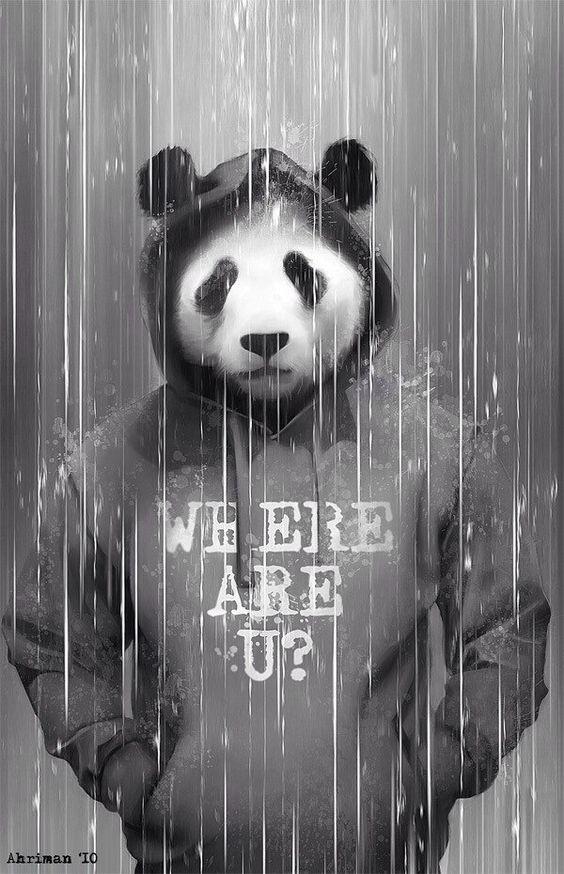 Where are you,Panda?
