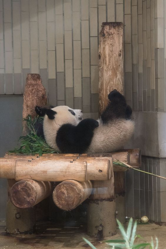 Weekend plans panda version